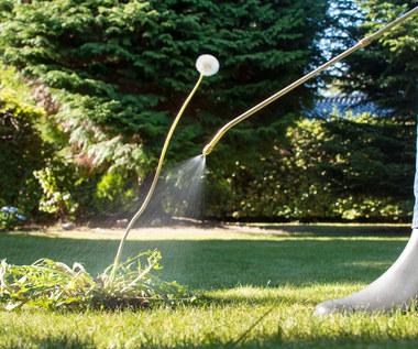 Naturalne sposoby na chwasty na działce i w ogrodzie. Szybciej znikną