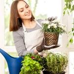 Naturalne sposoby pielęgnowania roślin doniczkowych