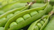 Naturalny kosmetyk: Zielony groszek