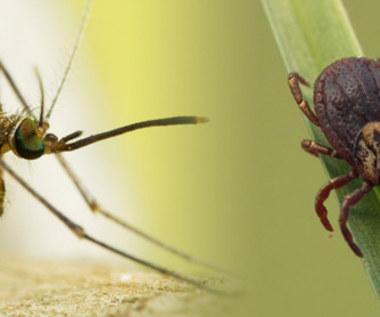 Naturalny środek przeciw kleszczom i komarom