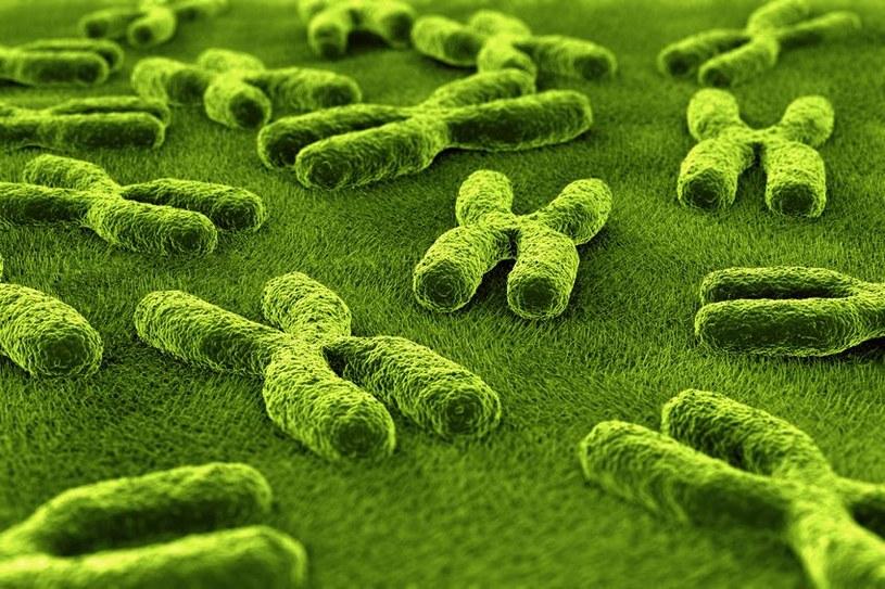 Naukowcom udało się stworzyć jeden sztuczny chromosom. Pora na kolejne? /123RF/PICSEL