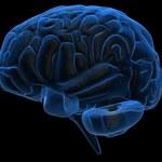 Naukowcy alarmują: Koronawirus może atakować mózg