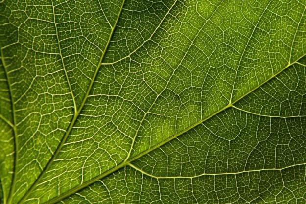 Naukowcy dowiedli, że rośliny potrafią... liczyć /123RF/PICSEL