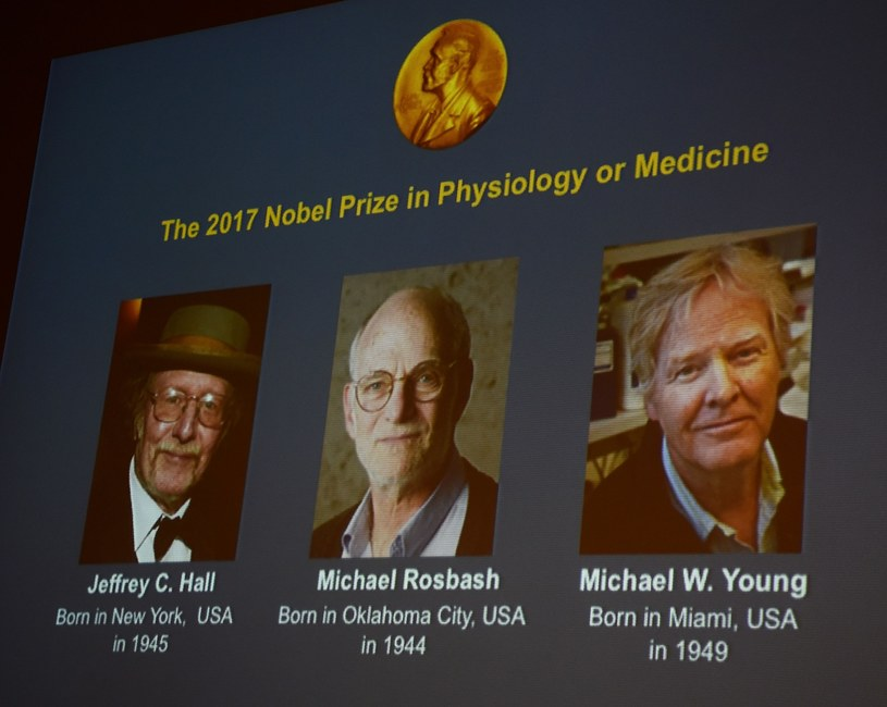 Naukowcy - Jeffrey C. Hall, Michael Rosbash i Michael W. Young - zostali laureatami nagrody Nobla w dziedzinie fizjologii i medycyny /JONATHAN NACKSTRAND /East News
