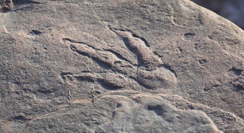 Naukowcy nie mają pewności, jaki gatunek dinozaura pozostawił ten odcisk /materiały prasowe