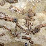 """Naukowcy odkryli 34-centymetrowy """"pazur"""" dinozaura"""