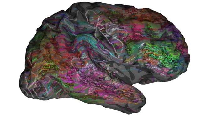 Naukowcy potwierdzili istnienie systemu semantycznego /materiały prasowe