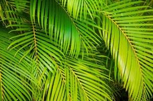Naukowcy przyjrzeli się procesowi fotosyntezy