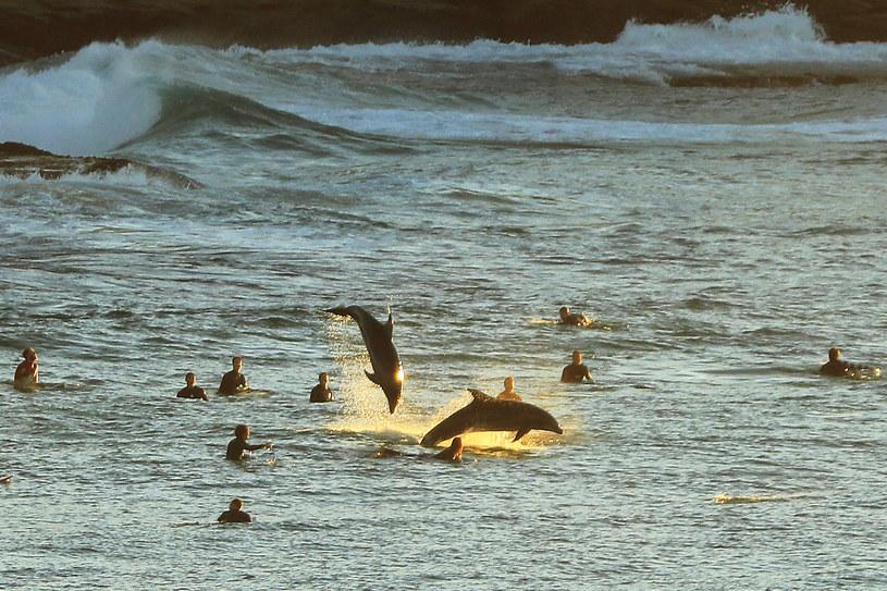 """Naukowcy są przekonani, że delfiny mówią sobie """"po imieniu"""". Co najlepsze, jest ono nadawane przez rodziców! / Mark Evans / Contributor /Getty Images"""