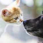 Naukowcy sprawdzili, czy rzeczywiście koty są mniej lojalne niż psy