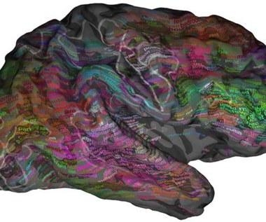 Naukowcy stworzyli mózgowy atlas słów