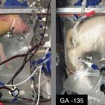 Naukowcy stworzyli sztuczną macicę - nowa nadzieja dla wcześniaków