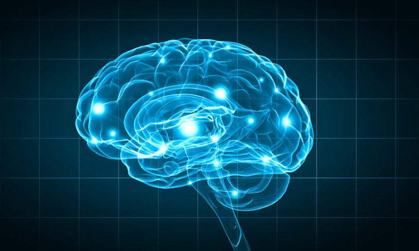 Naukowcy stworzyli tzw. holograficzny modulator mózgu /123RF/PICSEL
