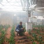 Naukowcy stworzyli ziemniaki, które będzie można hodować na Marsie