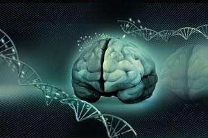Naukowcy wszczepili myszom fałszywe wspomnienia