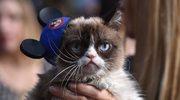 Naukowcy wymyślili muzykę idealną dla kotów