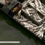 Naukowcy z Kentucky ogłuszyli ryby rażąc je prądem