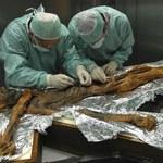 Naukowcy zbadali, co było ostatnim posiłkiem Ötziego. Prawdziwa uczta