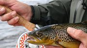 Naukowcy zdradzają jak najlepiej łowić ryby