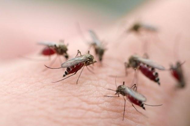 Naukowcy znaleźli sposób na malarię? /123RF/PICSEL