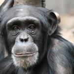 Naukowcy zrezygnują z eksperymentów na zwierzętach?