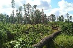Nawałnice na zachodzie kraju. Połamane drzewa blokują tory