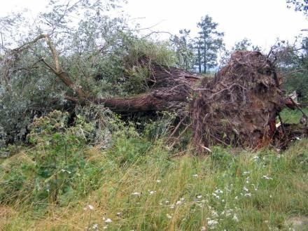 Nawałnice przetoczyły się nad Dolnym Śląskiem /RMF24