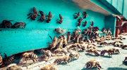 Nawet 45 stopni Celsjusza! Życie pszczół zagrożone