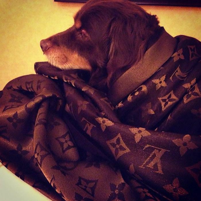 """""""Nawet mojemu psu wiedzie się lepiej niż wam, biedaki"""" - zwróćcie uwagę, że pies okryty jest ubraniem marki Louis Vuitton /materiały prasowe"""