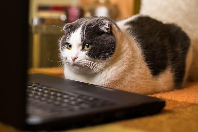 Nawet najmniejsza zmiana w przyzwyczajeniu kota może spowodować, że będzie zestresowany /123RF/PICSEL