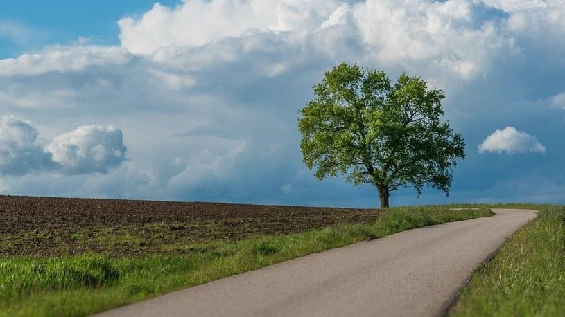 Nawet pojedyncze drzewa znacznie schładzają miasta podczas upałów /Geekweek