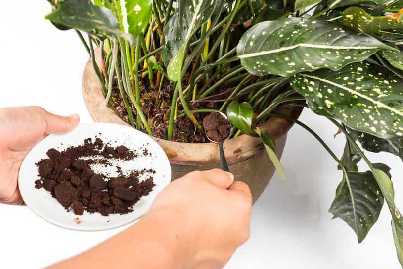 Nawóz do roślin /©123RF/PICSEL