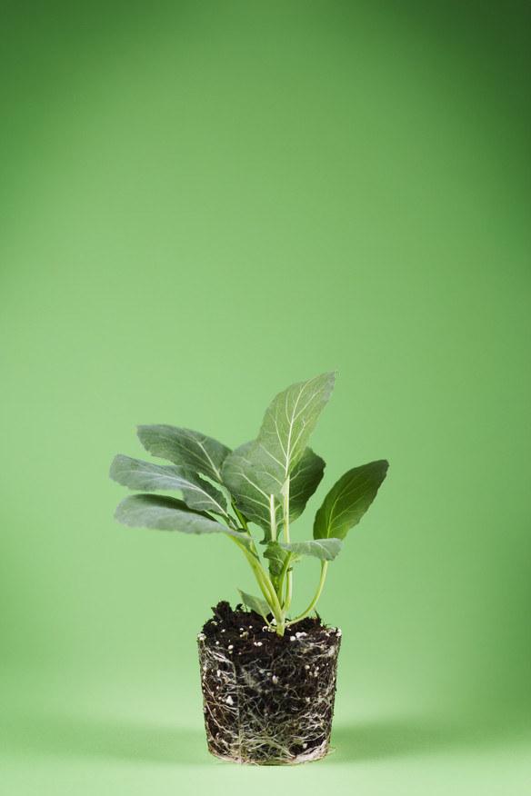 Nawożenie roślin /© Photogenica