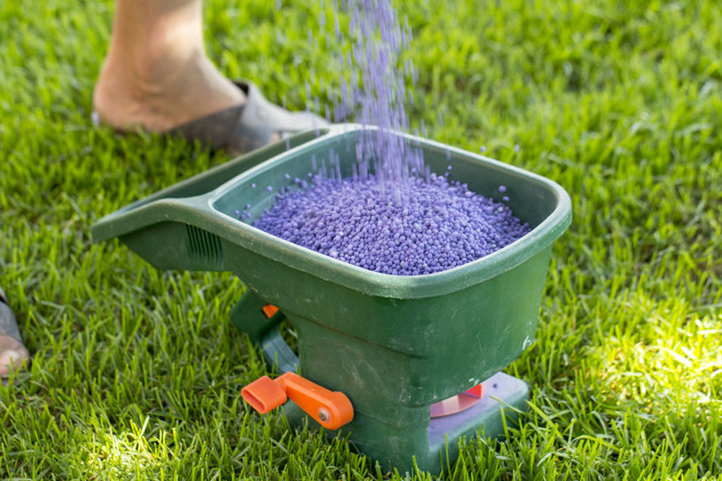 Nawożenie trawnika /©123RF/PICSEL