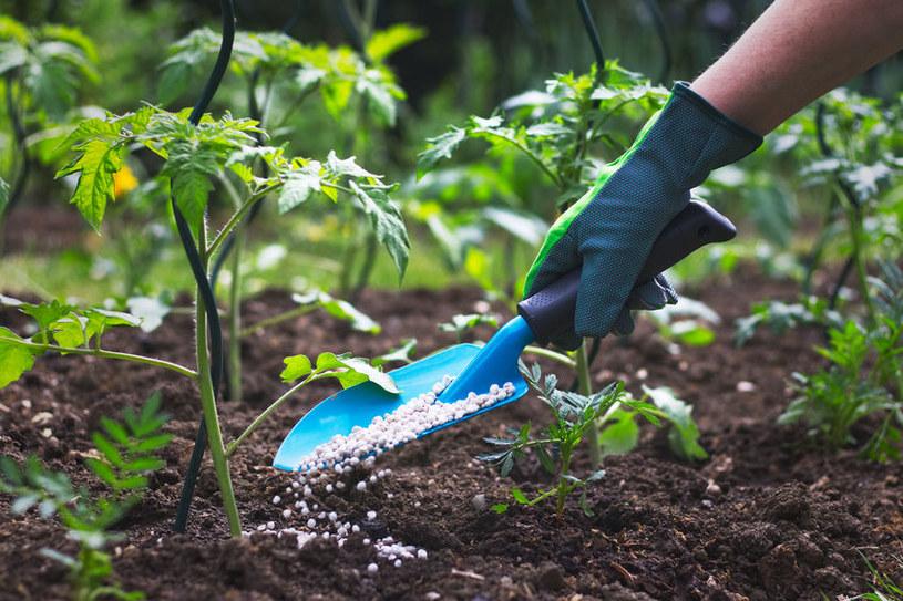 Nawozy mineralne nie użyźniają gleby /123RF/PICSEL