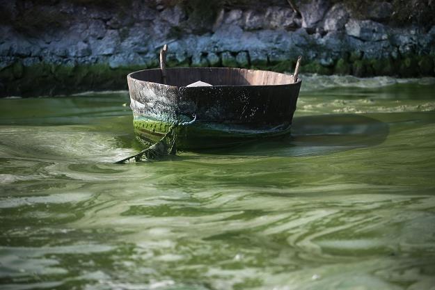Nawozy wpływające do wody /AFP