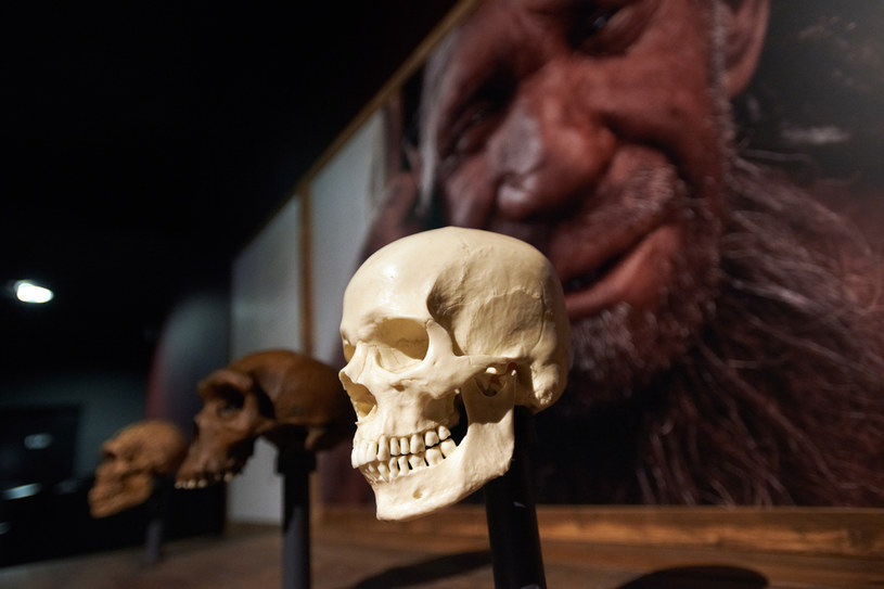 Neandertalczyk; zdj. ilustracyjne /Alain Pitton/NurPhoto  /Getty Images