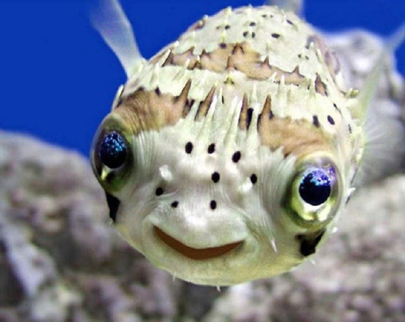 Nemo? /imgur.com