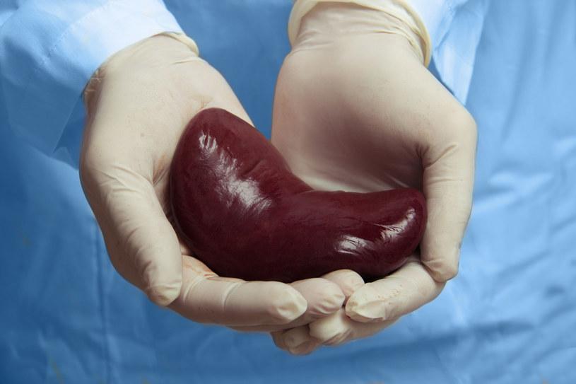 Nerki są jednym z najważniejszych narządów /123RF/PICSEL