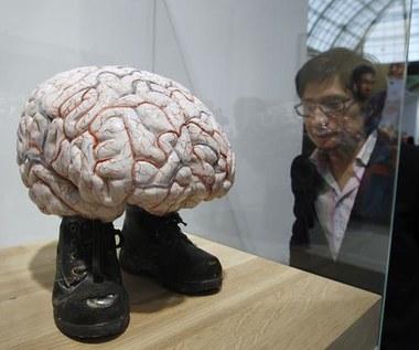 Neurolaw - nowa nauka czy science-fiction?