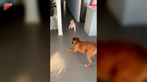 Nic go tak nie rozśmiesza, jak zabawa z psem