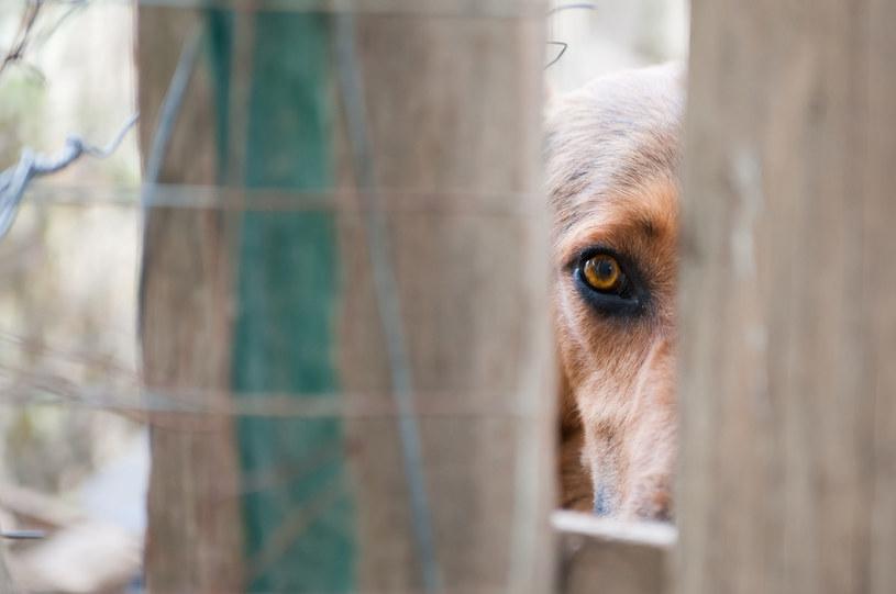 Nie bądźmy obojętni na psi, czasem bardzo okrutny, los /123RF/PICSEL