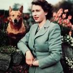 """Nie chce słyszeć o Meghan. Królowa będzie rozmawiać tylko """"o psach i koniach"""", nie o rodzinie!"""