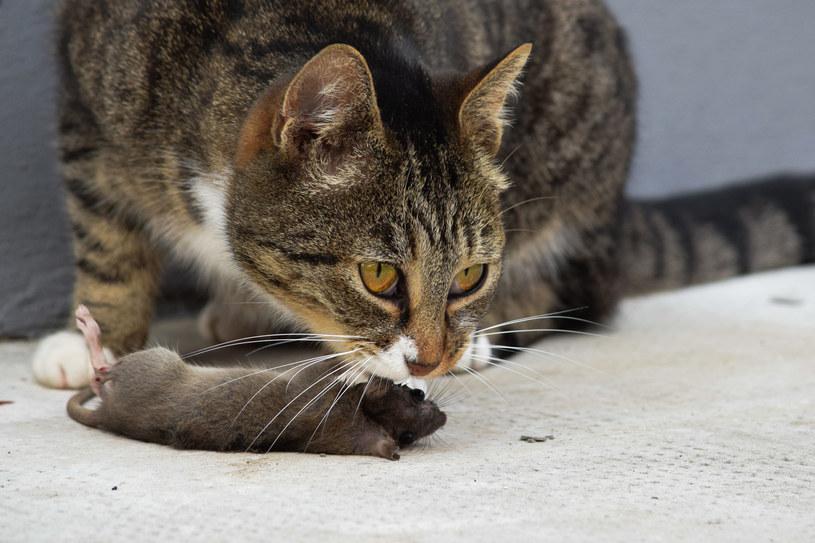 Nie każdy jest w stanie karmić swojego pupila tuszkami innych zwierząt /123RF/PICSEL
