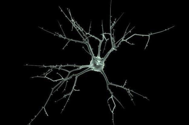 Nie każdy neuron jest taki sam /123RF/PICSEL