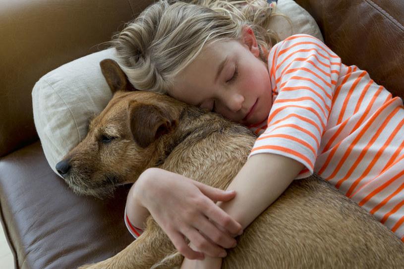 Nie każdy pies lubi przytulanie /123RF/PICSEL