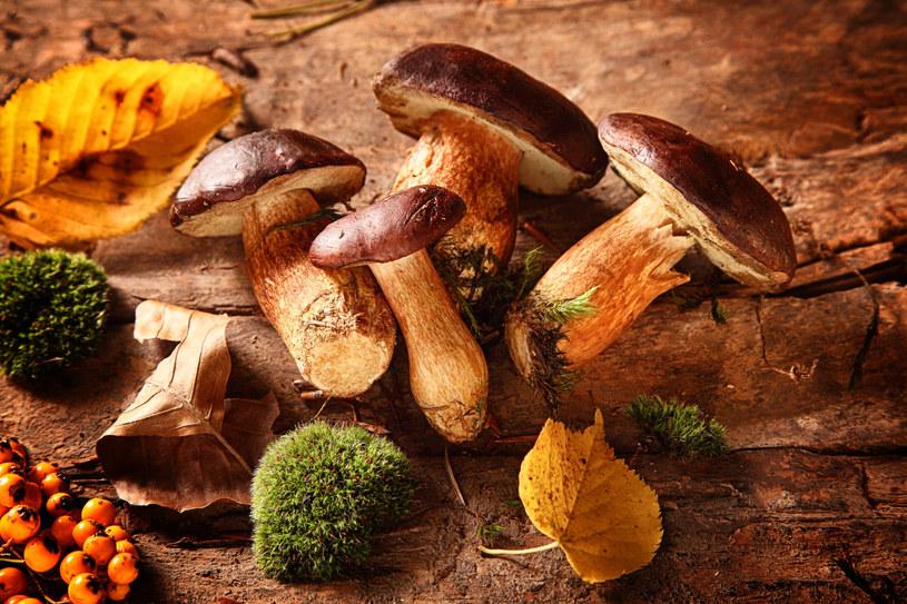 Nie lekceważ nawet najmniejszych objawów. Zatrucie grzybami może być nawet śmiertelne! /123RF/PICSEL