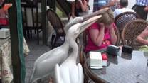 Nie mogła zjeść w spokoju. Wszystko przez dwa pelikany