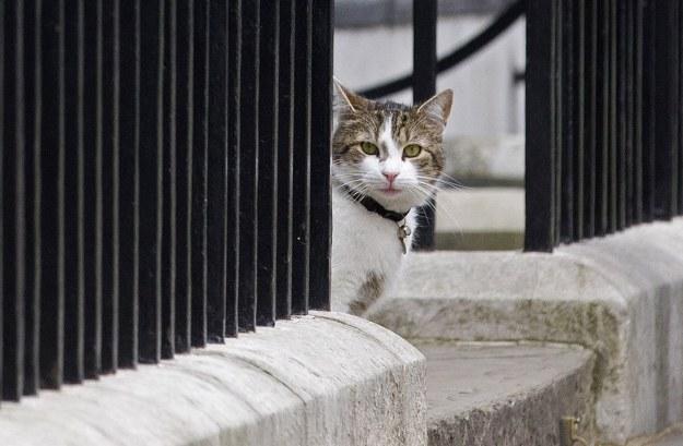 Nie powinno się wyprowadzać kotów na spacery /AFP