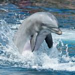 Nie słonie, a delfiny mają najdłuższą pamięć!